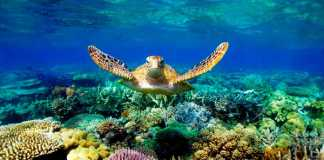 Great Barrier Reef (Image Source: Pinterest), crowdink.com, crowdink.com.au, crowd ink, crowdink, travel, great barrier reef