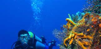 Zen Resort Scuba Diving, crowdink.com, crowdink.com.au, crowd ink, crowdink, travel, lifestyle