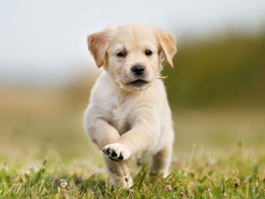 Puppies crowdink.com, crowdink.com.au, crowdink, crowd ink
